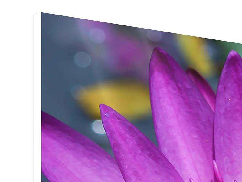 Hartschaumbild 3-teilig modern Makro Seerose in Lila