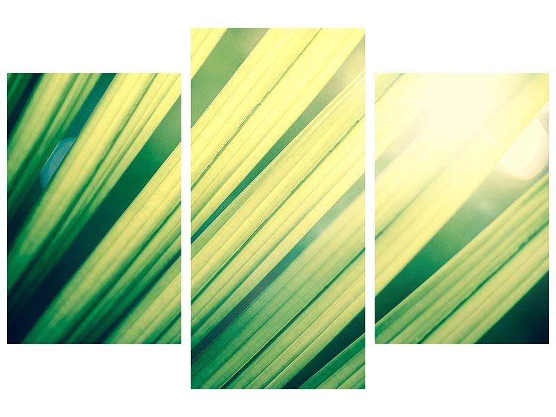 Hartschaumbild 3-teilig modern Beleuchtetes Palmblatt