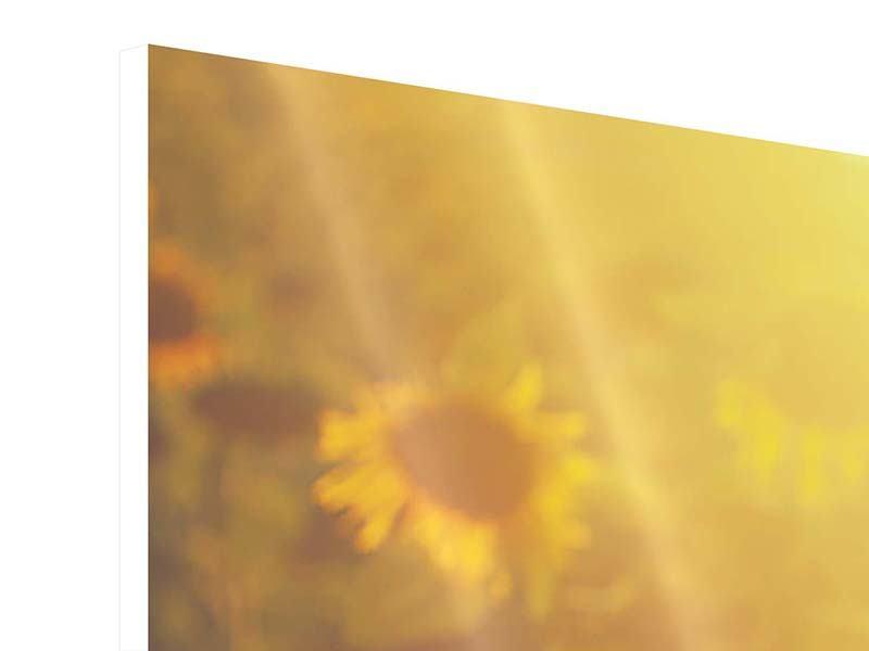 Hartschaumbild 4-teilig modern Sonnenblumen im goldenen Licht