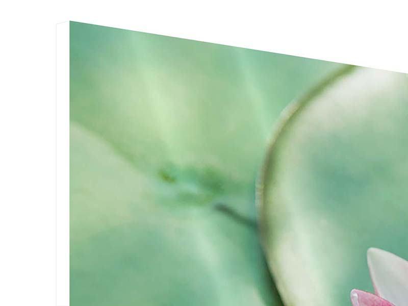 Hartschaumbild 4-teilig modern Der Frosch und das Lotusblatt