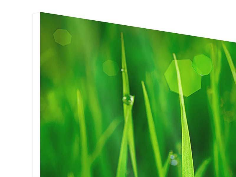 Hartschaumbild 4-teilig modern Gras mit Morgentau