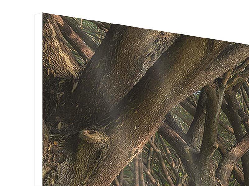 Hartschaumbild 4-teilig modern Alter Baumbestand