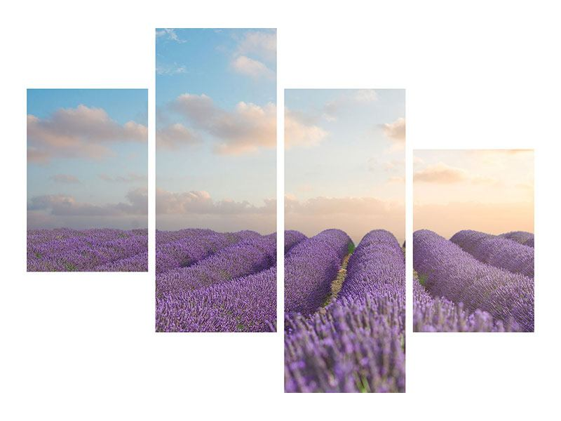 Hartschaumbild 4-teilig modern Das blühende Lavendelfeld