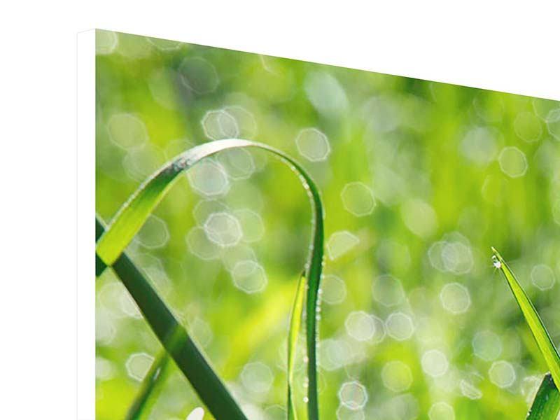 Hartschaumbild 4-teilig modern Sonniges Gras