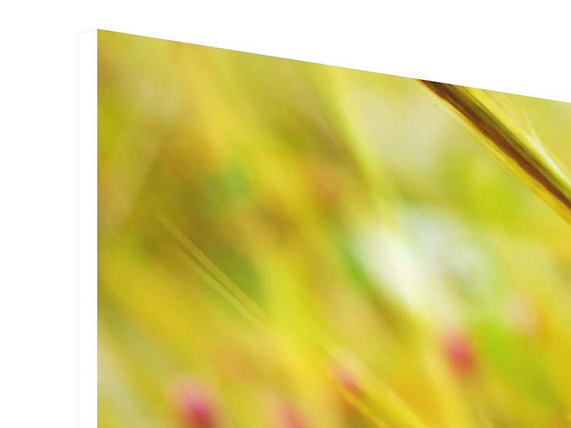 Hartschaumbild 4-teilig modern Das Weizenfeld