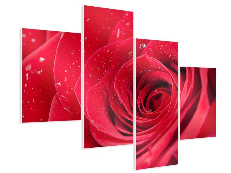 Hartschaumbild 4-teilig modern Rote Rose im Morgentau