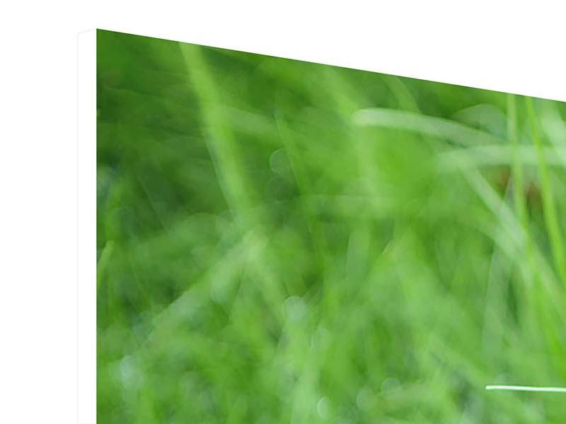 Hartschaumbild 4-teilig modern Grashalme