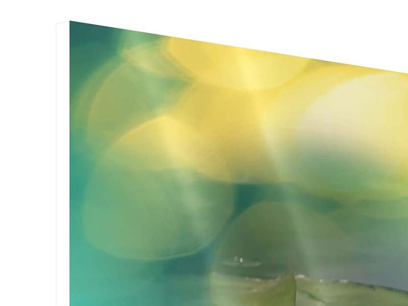 Hartschaumbild 4-teilig modern Lotus-Spiegelung