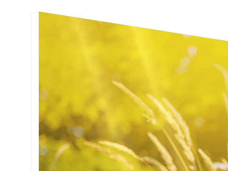 Hartschaumbild 4-teilig modern Sommerliche Blumenwiese
