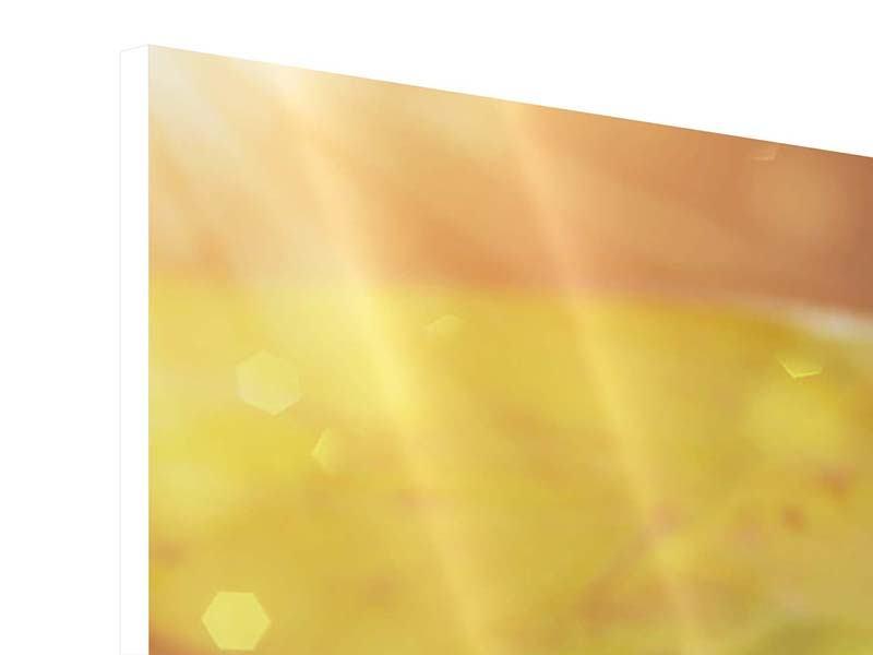 Hartschaumbild 4-teilig Seerose