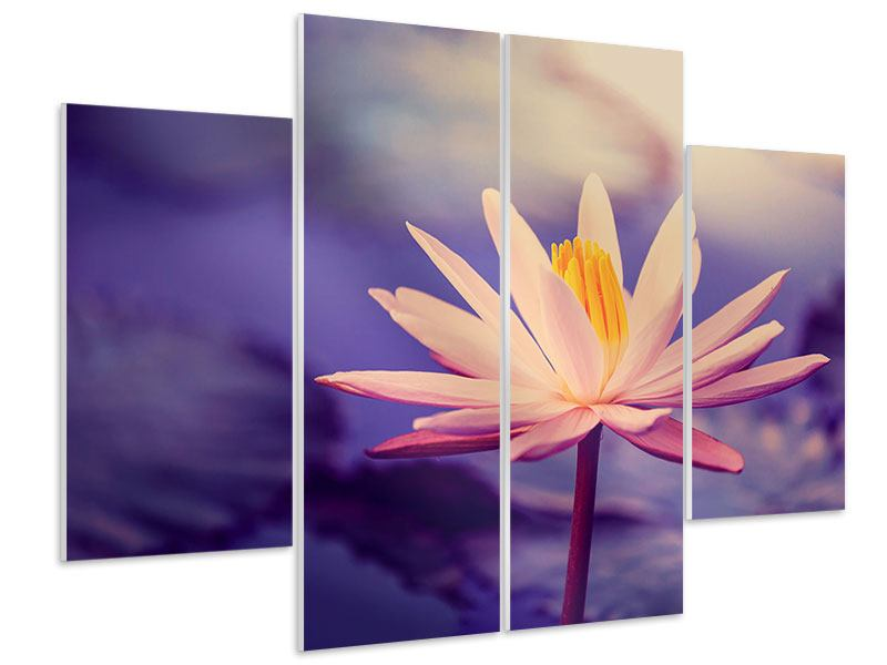 Hartschaumbild 4-teilig Lotus bei Sonnenuntergang