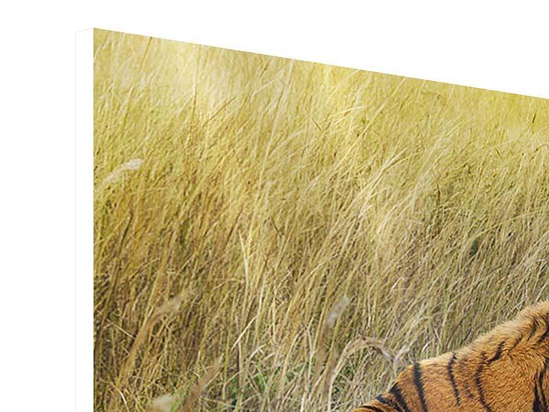 Hartschaumbild 4-teilig Der Tiger