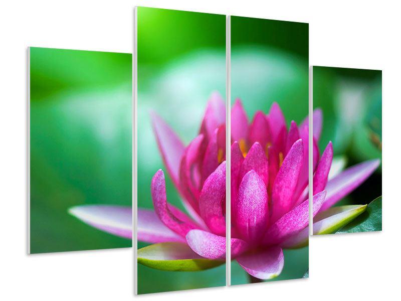 Hartschaumbild 4-teilig Lotus in Pink