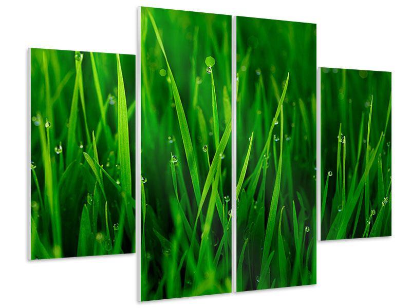Hartschaumbild 4-teilig Gras mit Morgentau