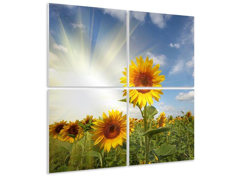 Hartschaumbild 4-teilig Sonnenblumen im Sonnenlicht
