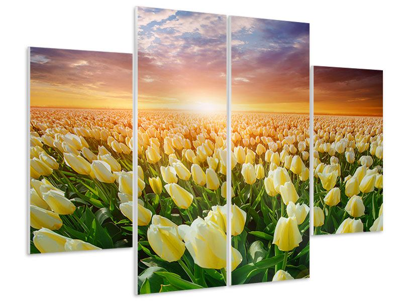 Hartschaumbild 4-teilig Sonnenaufgang bei den Tulpen