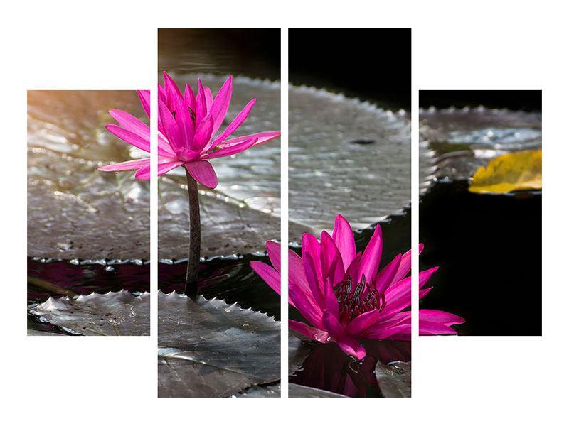 Hartschaumbild 4-teilig Seerosen im Morgentau