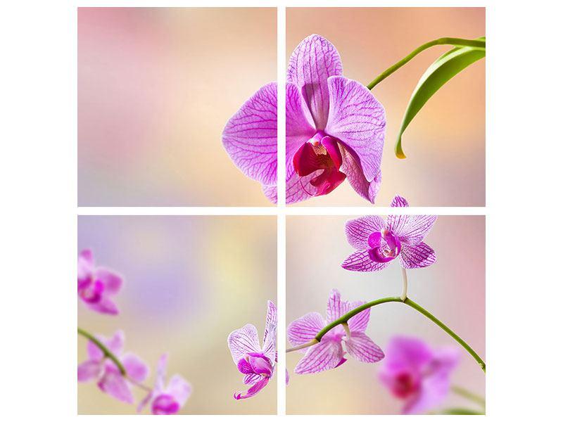 Hartschaumbild 4-teilig Romantische Orchideen