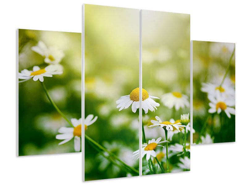 Hartschaumbild 4-teilig Die Gänseblümchen