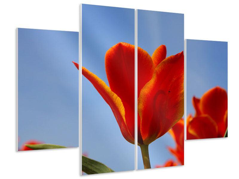 Hartschaumbild 4-teilig Rote Tulpen in XXL