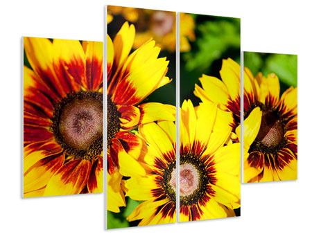 Hartschaumbild 4-teilig Reife Sonnenblumen