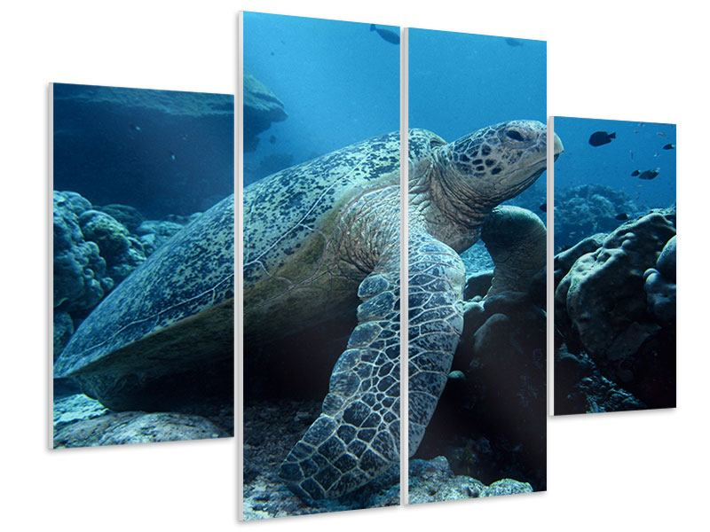 Hartschaumbild 4-teilig Die Meeresschildkröte