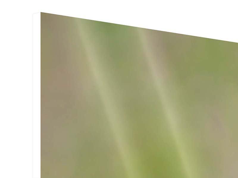 Hartschaumbild 4-teilig Die Wüstenblume