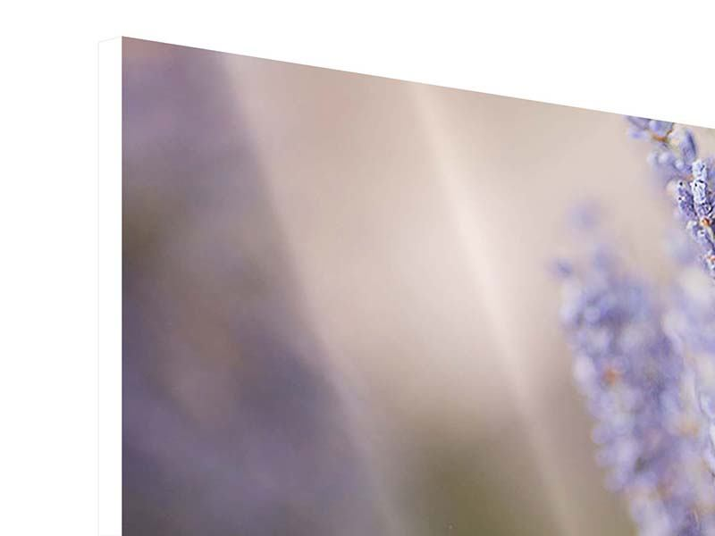 Hartschaumbild 4-teilig Lavendel XXL