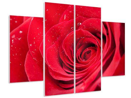 Hartschaumbild 4-teilig Rote Rose im Morgentau