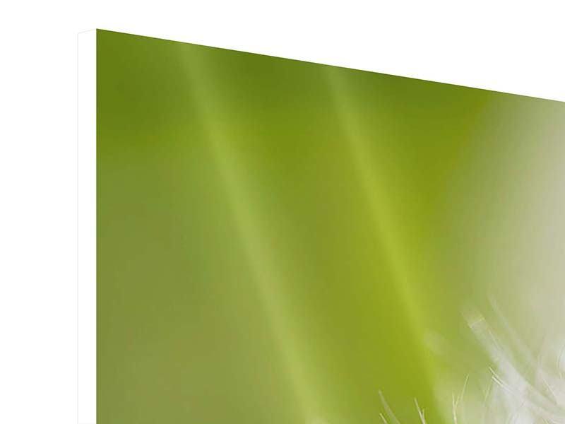 Hartschaumbild 4-teilig Pusteblume Löwenzahn
