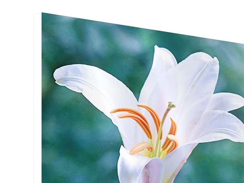 Hartschaumbild 4-teilig Weisses Lilienduo