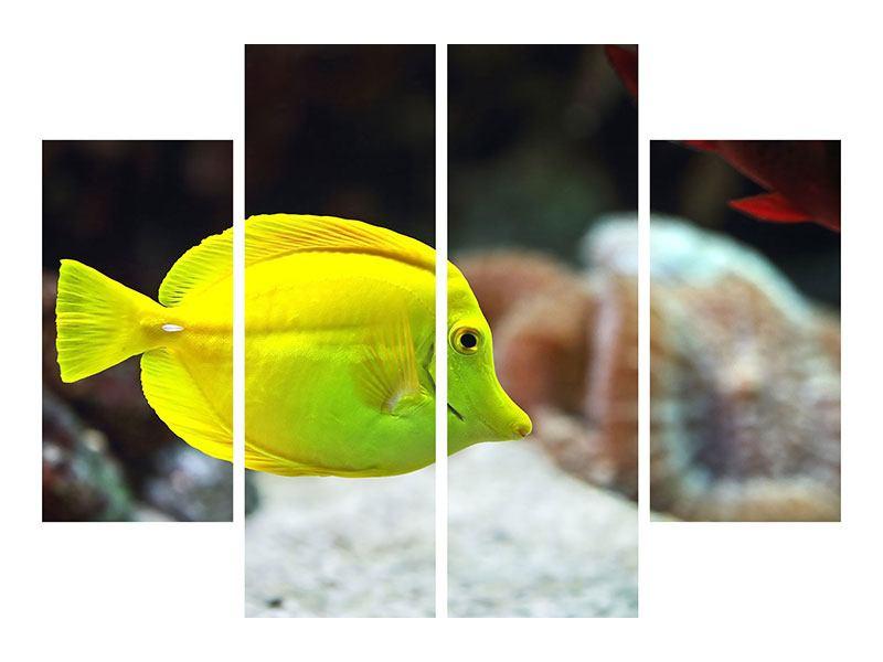 Hartschaumbild 4-teilig Segelflossendoktorfisch