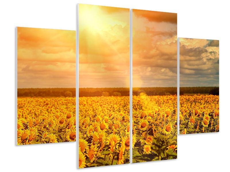 Hartschaumbild 4-teilig Goldenes Licht für Sonnenblumen