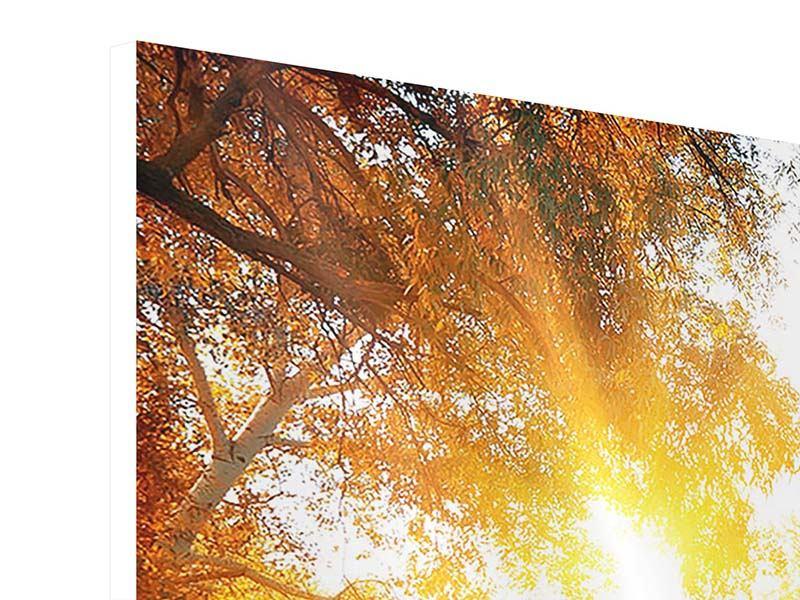 Hartschaumbild 4-teilig Waldspiegelung im Wasser