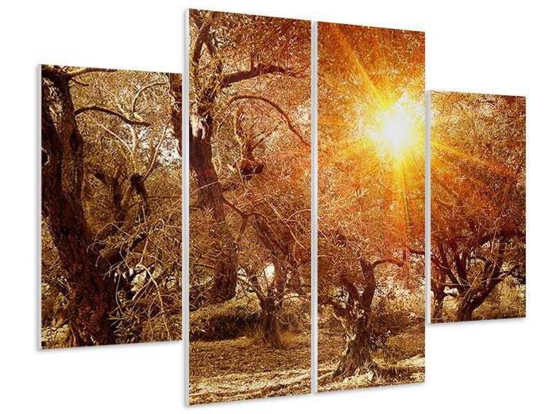 Hartschaumbild 4-teilig Olivenbäume im Herbstlicht