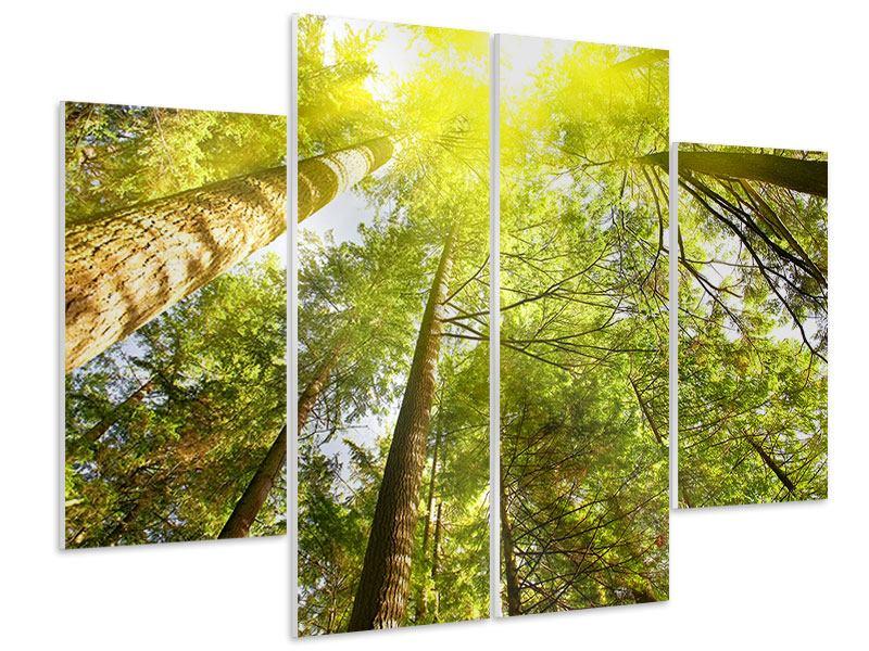 Hartschaumbild 4-teilig Baumkronen in der Sonne