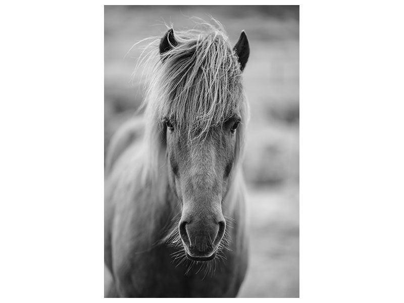 Hartschaumbild Da Steht Ein Pferd Auf`m Flur