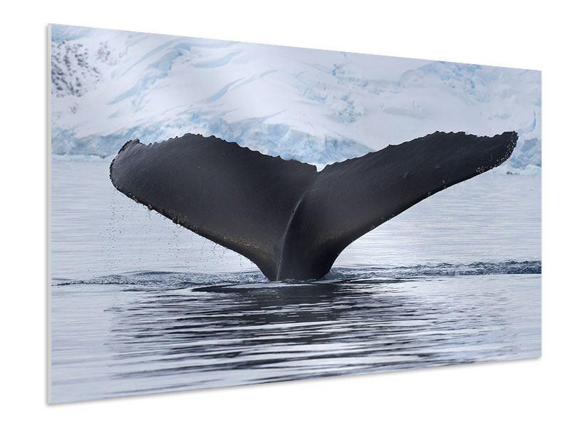 Hartschaumbild Der Buckelwal