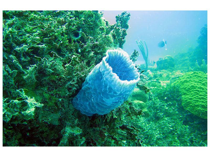 Hartschaumbild Korallen