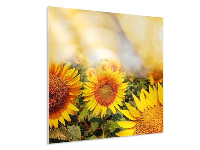 Hartschaumbild Das Licht der Sonnenblumen