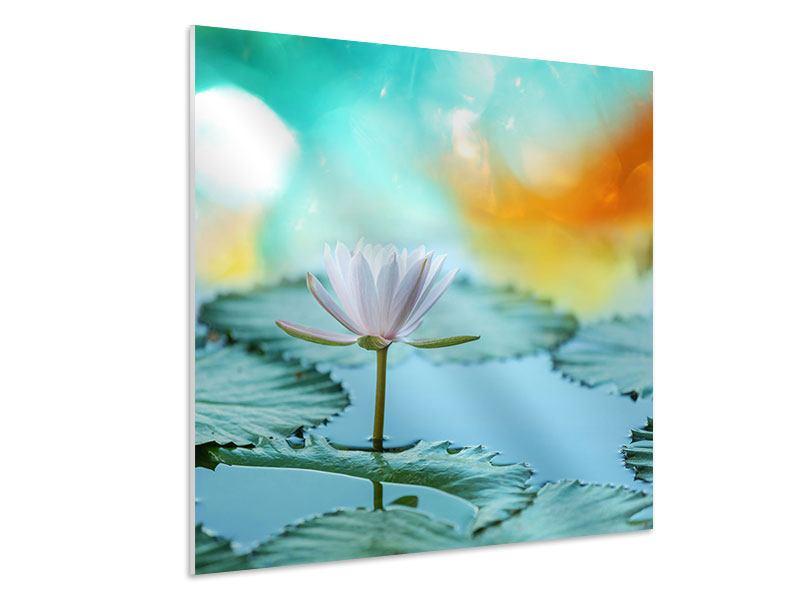 Hartschaumbild Verträumte Lotus