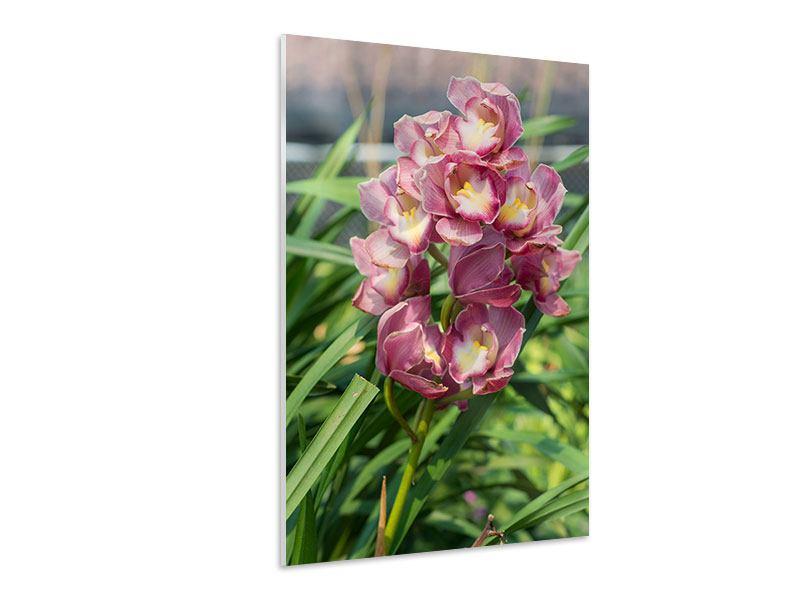 Hartschaumbild Wilde Orchideen