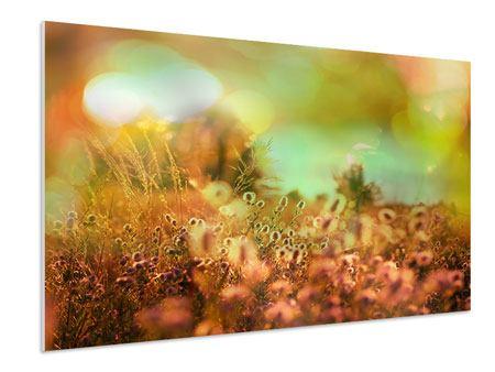 Hartschaumbild Blumenwiese in der Abenddämmerung