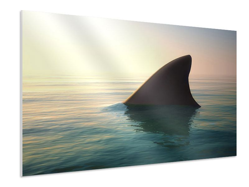 Hartschaumbild Haifischflosse