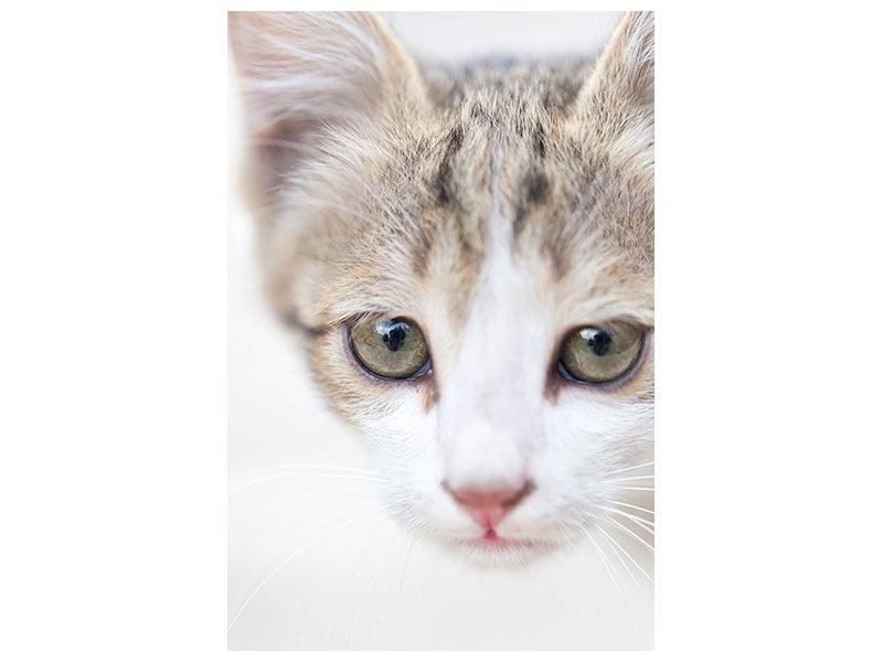 Hartschaumbild Katzenkind