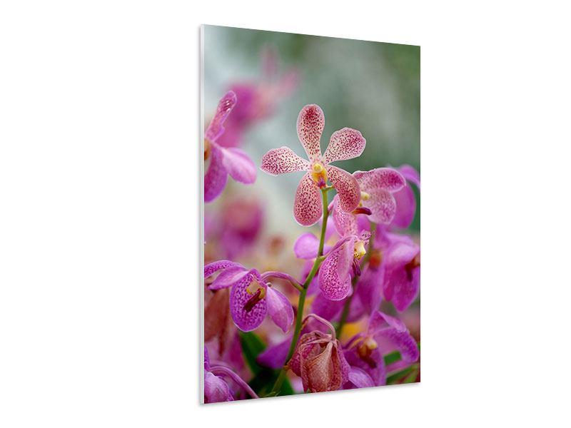 Hartschaumbild Orchidee Pünktchen