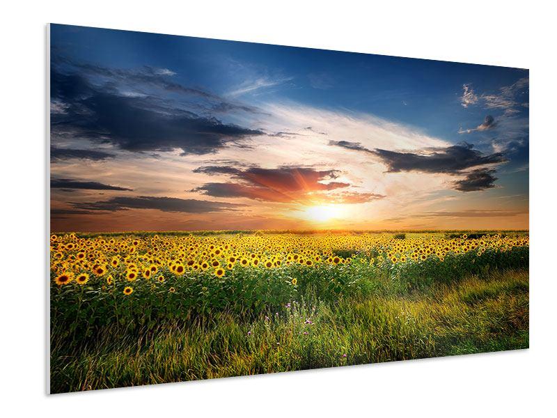 Hartschaumbild Ein Feld von Sonnenblumen
