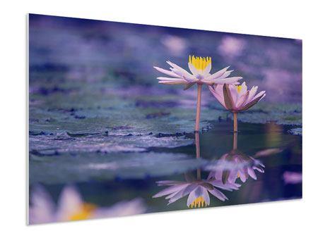 Hartschaumbild Lotus Duo im Sonnenaufgang