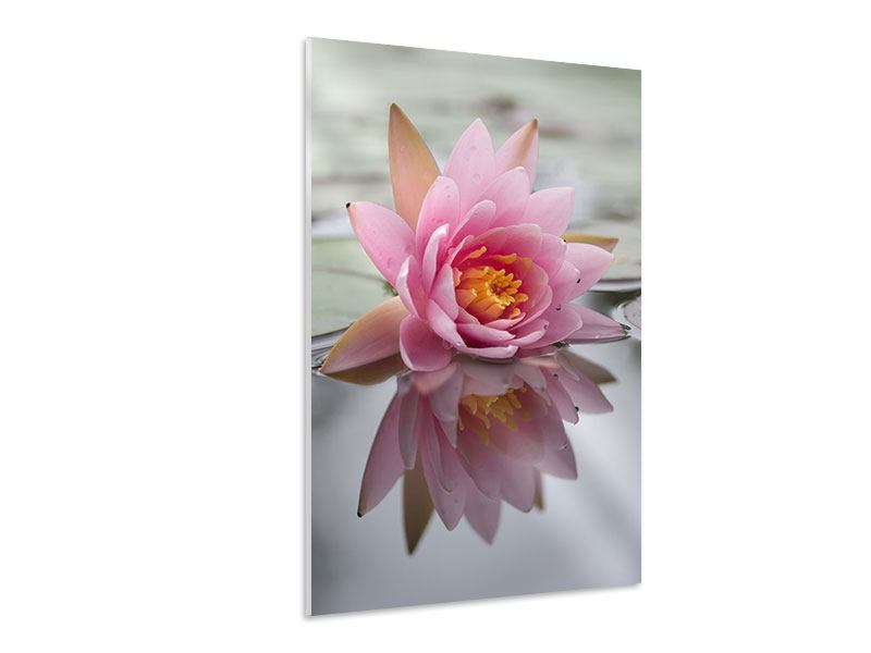 Hartschaumbild Lotus