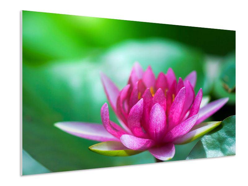 Hartschaumbild Lotus in Pink